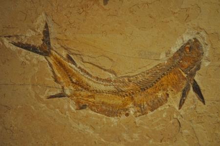 Fóssil Peixe Romualdo