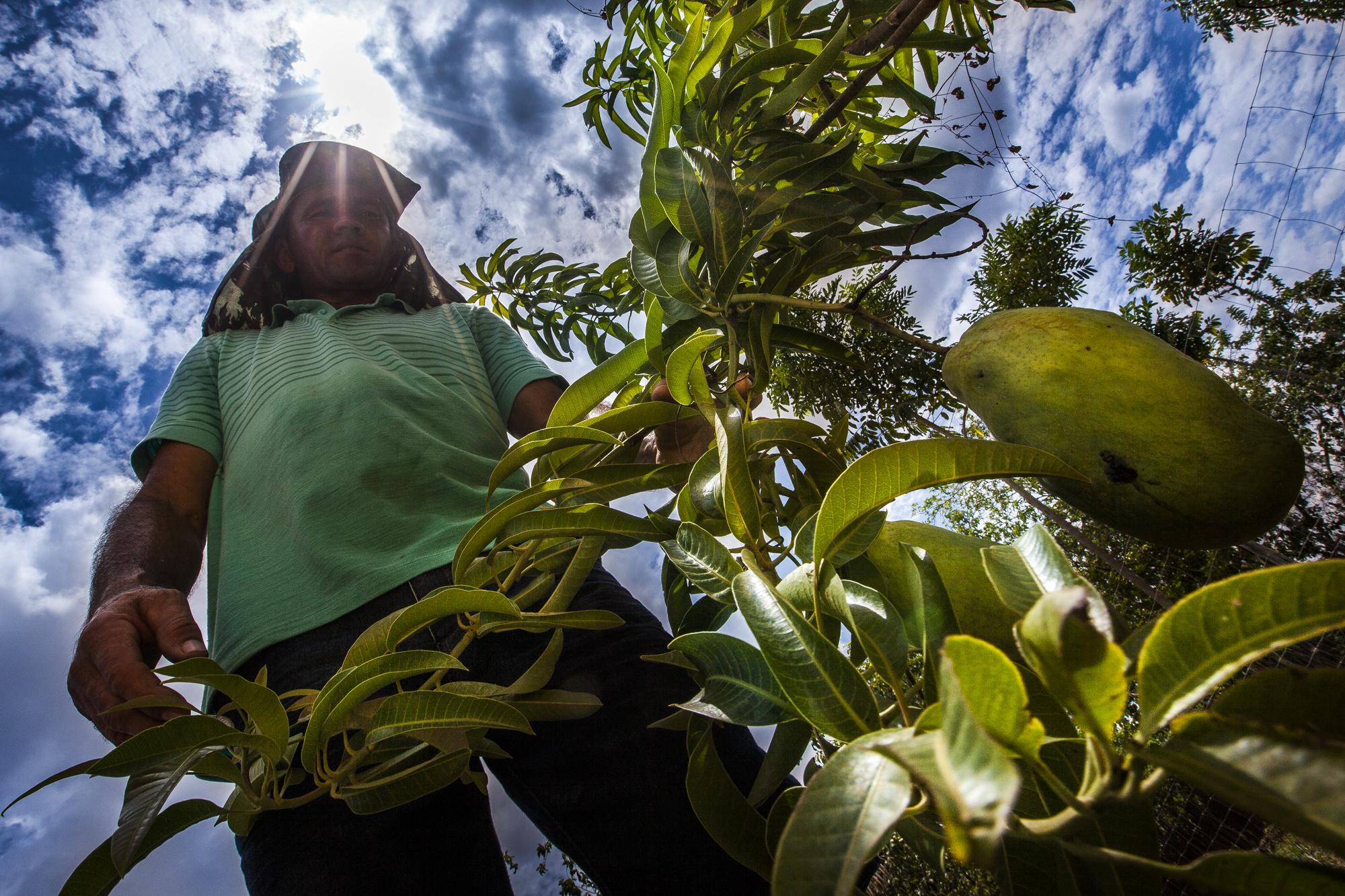 Ao todo, 31 municípios estão contemplados com o repasse, por meio do Projeto Paulo Freire. O programa tem parceria do Fundo Internacional de Desenvolvimento da Agricultura e beneficia, nesta etapa, mais de 12 mil famílias.