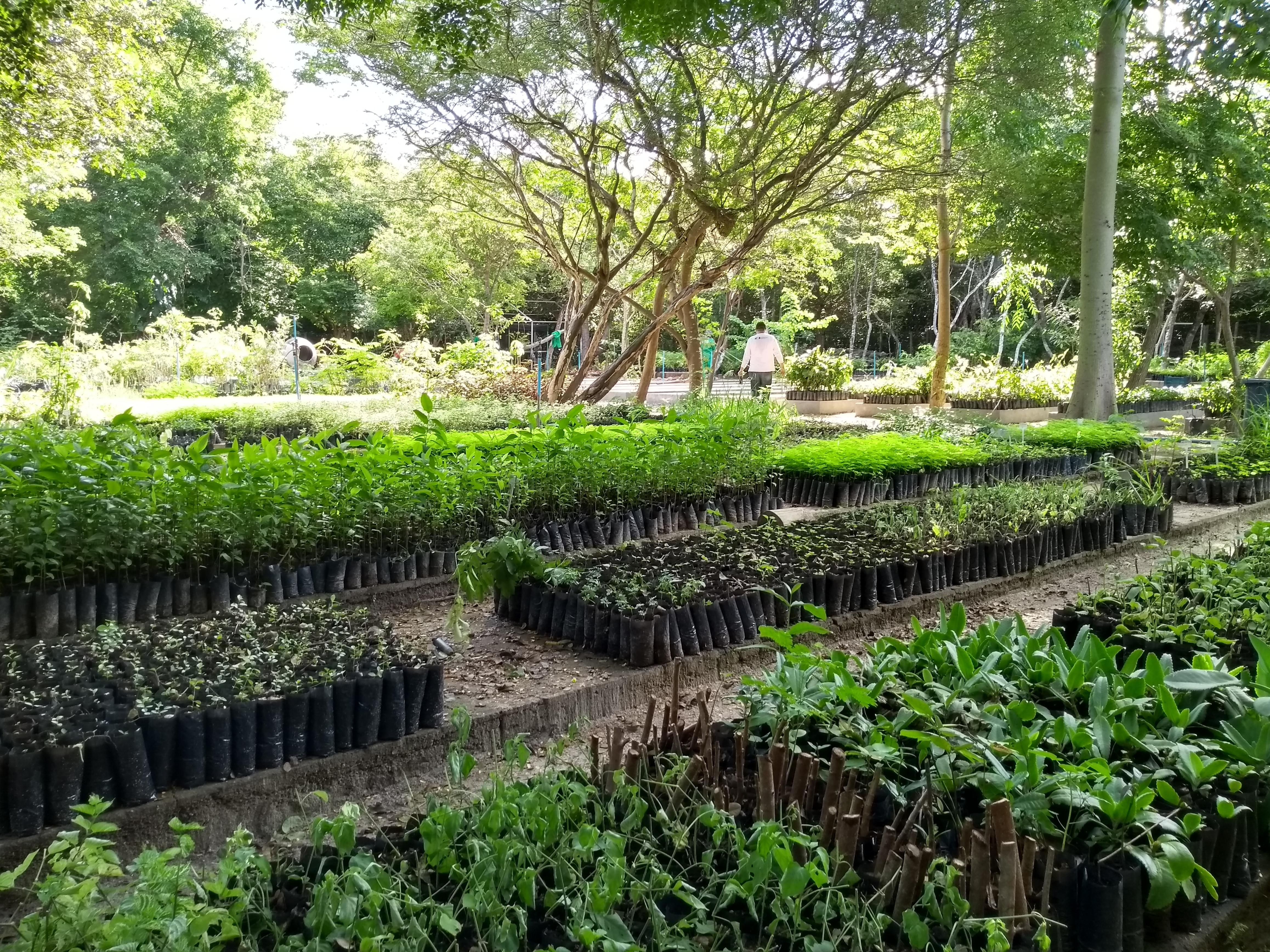 Produção e doação de mudas no Ceará continuam em ritmo forte