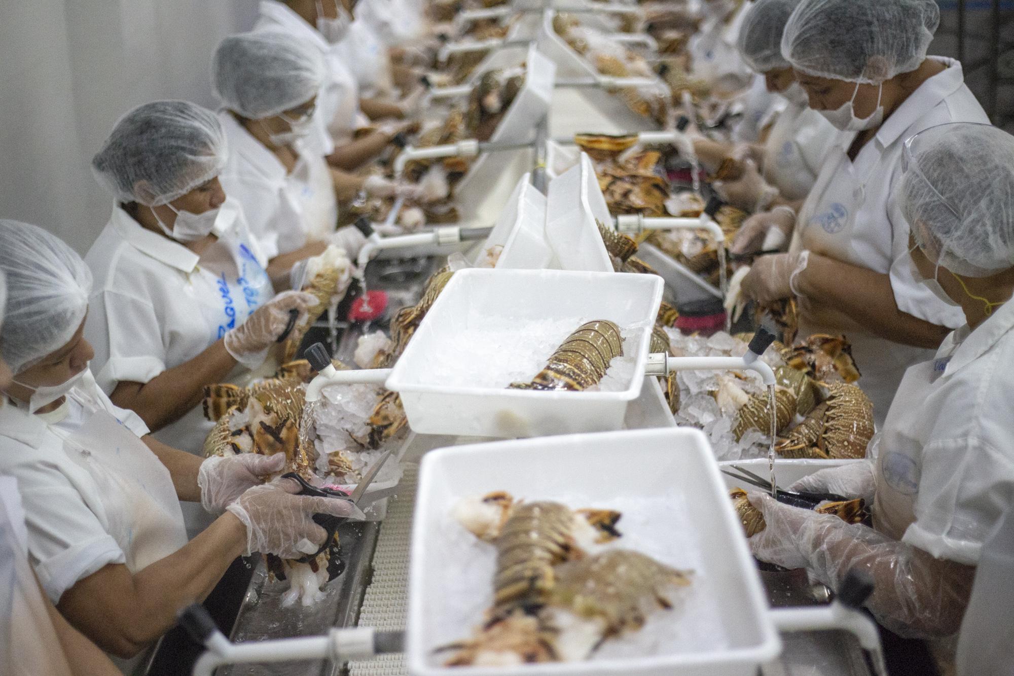 Produção de pescado