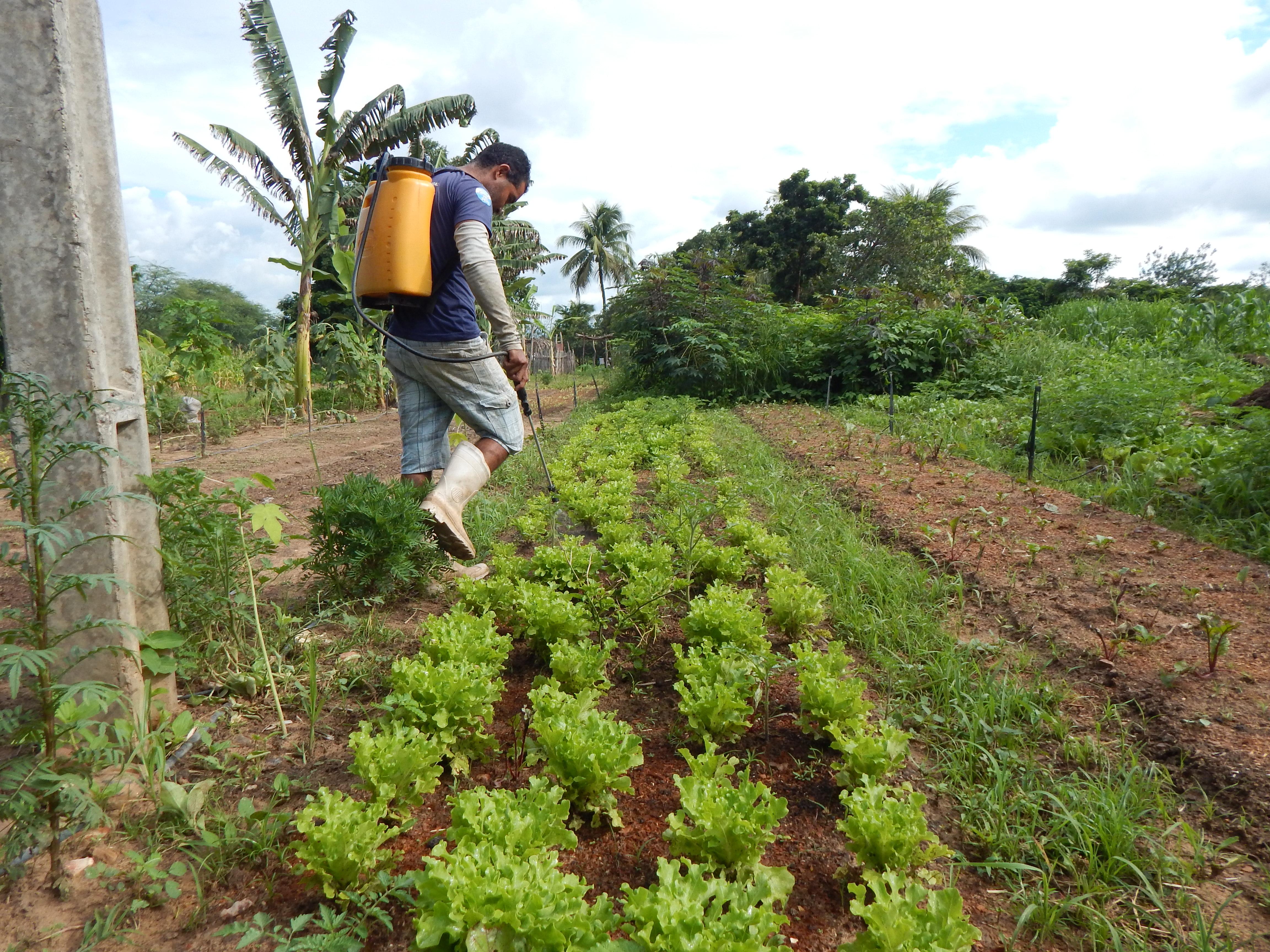 Produtores no Cariri combatem lagarta do milho com uso de bioinseticida Bt